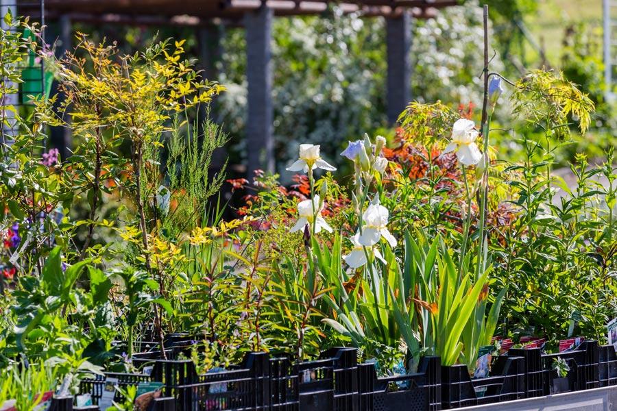 Pflege für Pflanzen