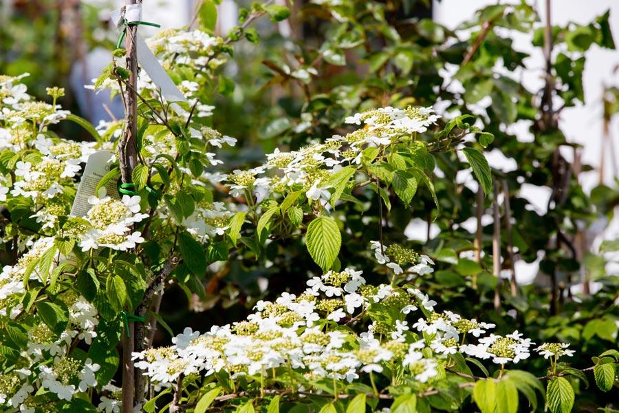 Gartenpflege von Hartmann Garten in Obergünzburg