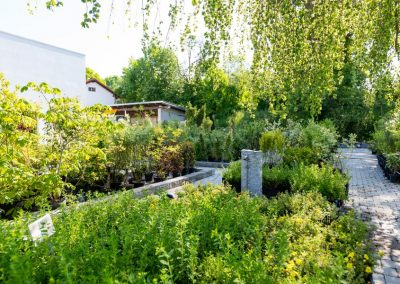 Grüne Oase bei Garten Hartmann