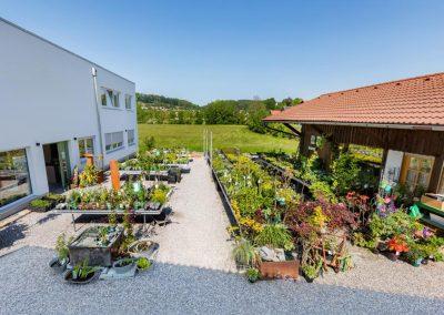 Verschiedene Pflanzen bei Garten Hartmann