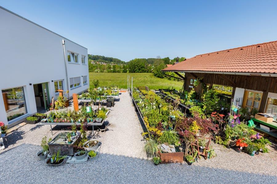 Unser Pflanzen-Sortiment bei Garten Hartmann