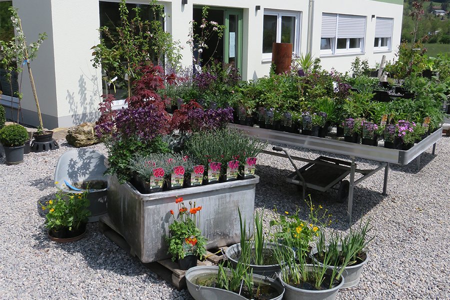 Pflanzenpark von Garten Hartmann